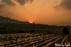 徳之島でマルチに反射する美しい夕焼け