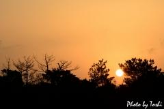 徳之島で朝日がのぼるとき