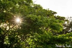 徳之島での夕陽が沈むとき