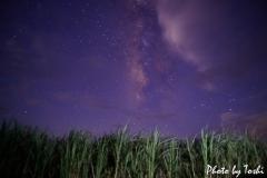 サトウキビ畑と星空
