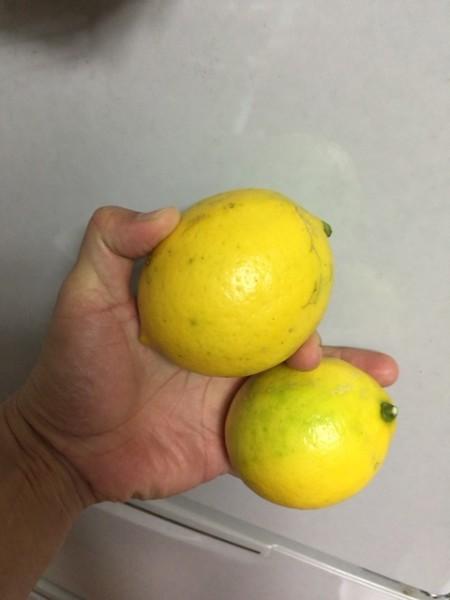 花徳マンゴーで収穫したレモン