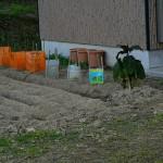 2月8日_トマトを植えます!