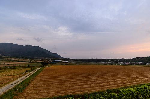 4月30日_Nikon 18-35 f/3.5-4.5G ED 投入! | 花徳マンゴー