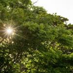 5月18日_やっぱり太陽の光芒が好きです!