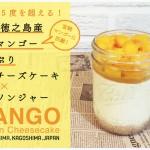 徳之島産「花徳マンゴー」をメイソンジャーに閉じ込めちゃいます!