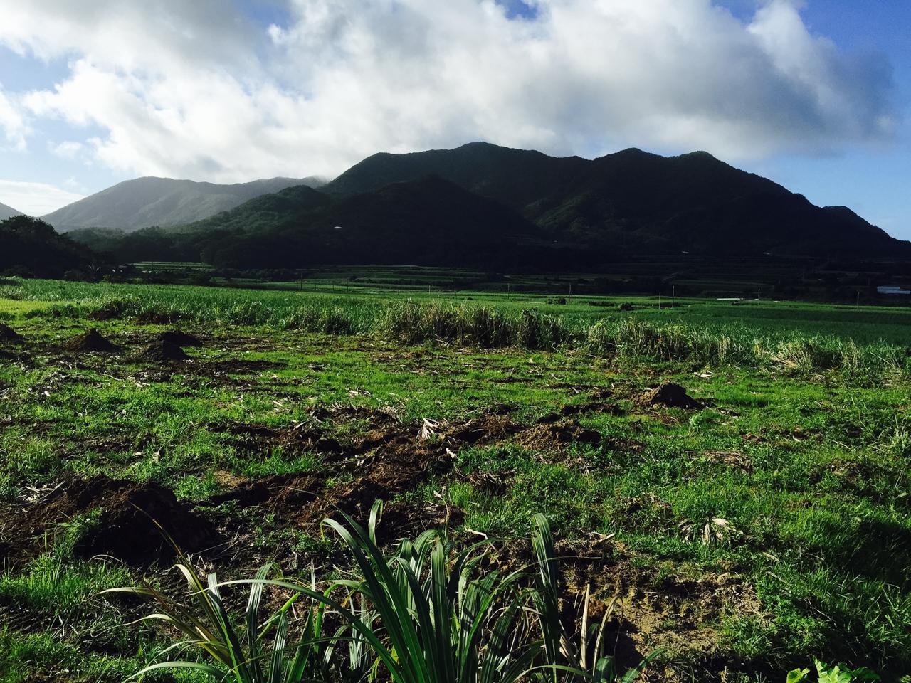 整備前の畑