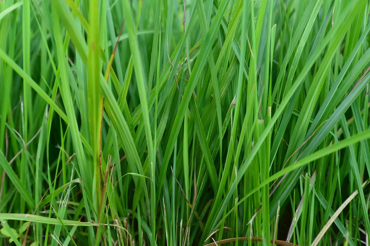 雑草の写真-1