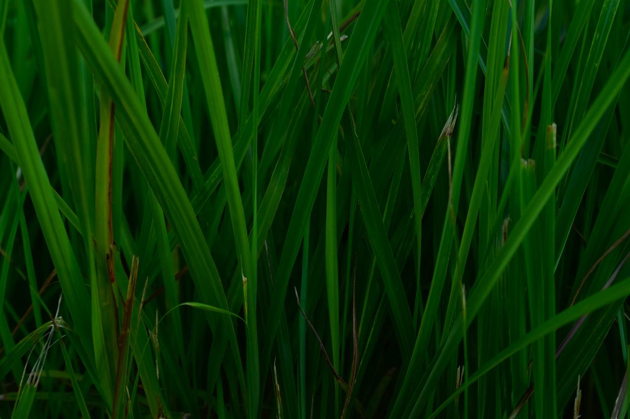 雑草の写真-2