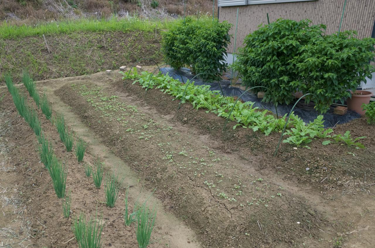 10月5日の家庭菜園の様子