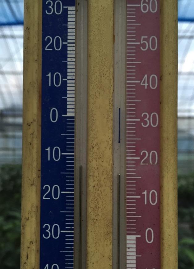 11月27日のビニールハウスの温度計