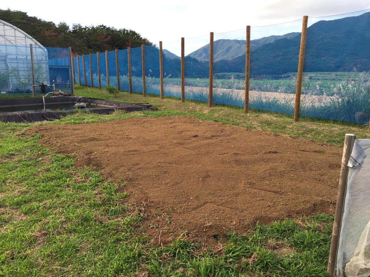 チェリモヤ畑の完成