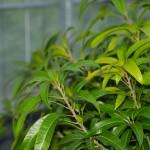 【植物栽培】植物が居心地の良い環境で育てよう!