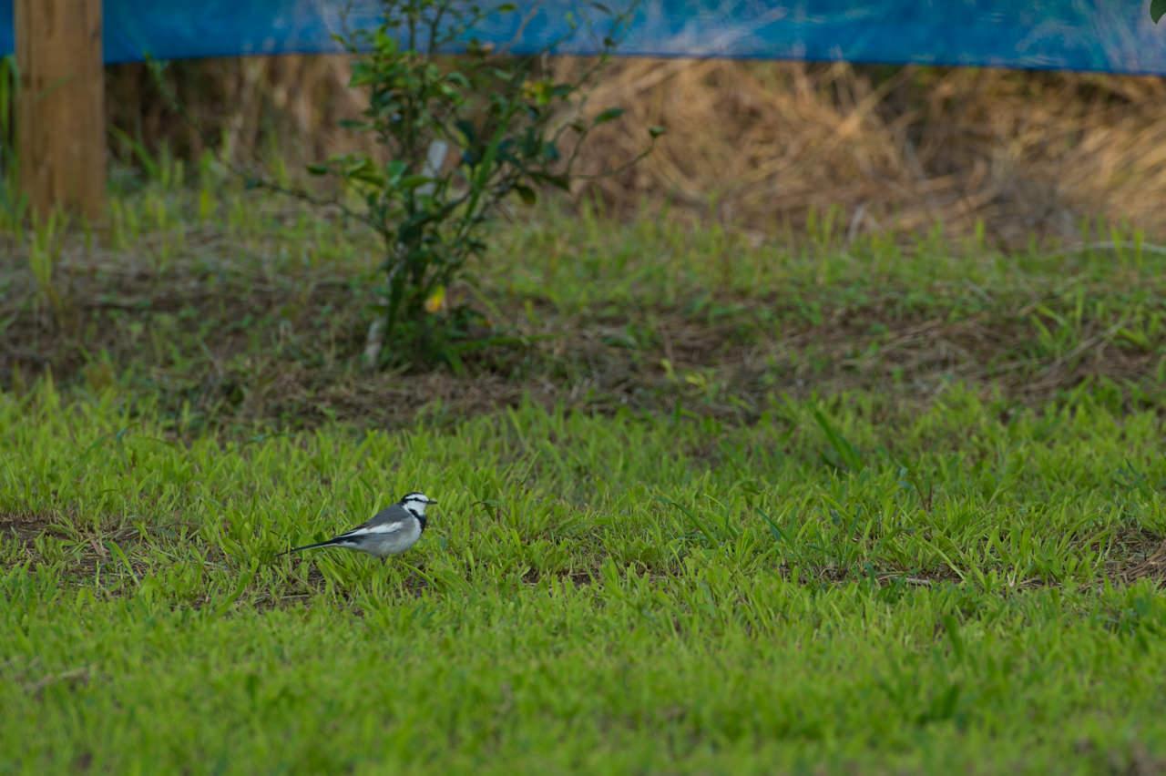 AF-S NIKKOR 70-200mm f/2.8G ED VR2で撮影した小鳥-2