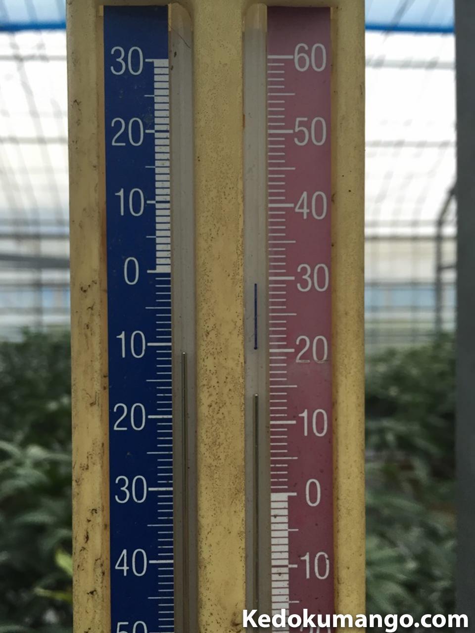 2016年1月15日のビニールハウス内の温度計