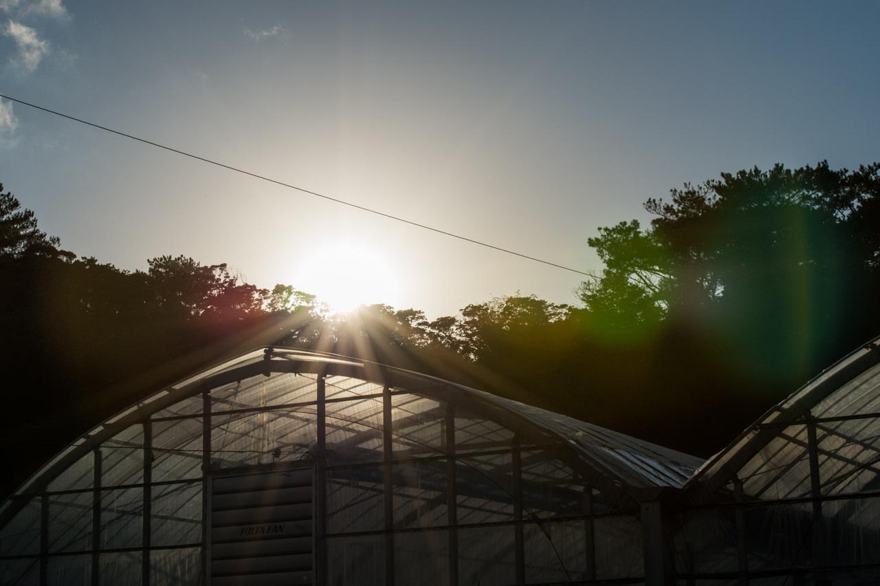 ナノクリスタルコートによる太陽の直写テスト-2