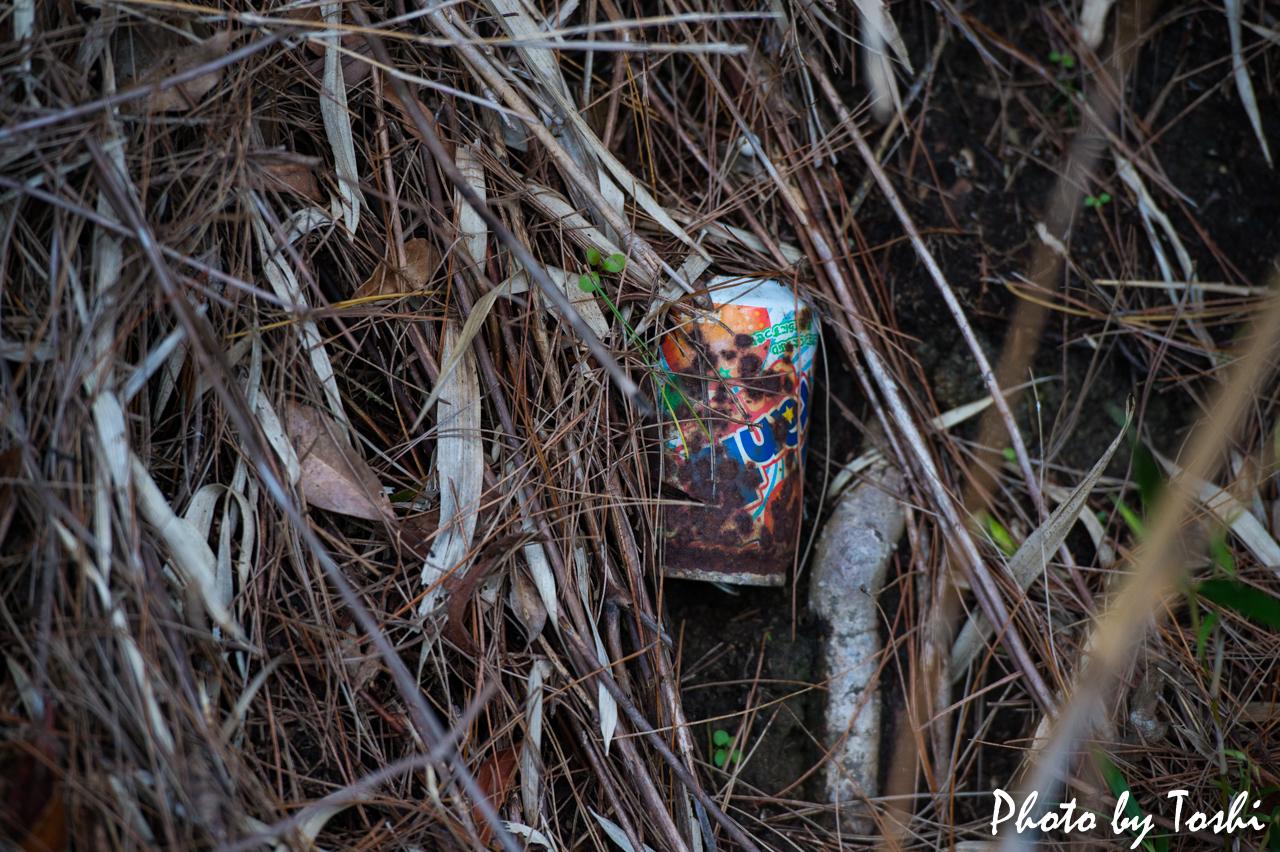 空き缶ゴミ