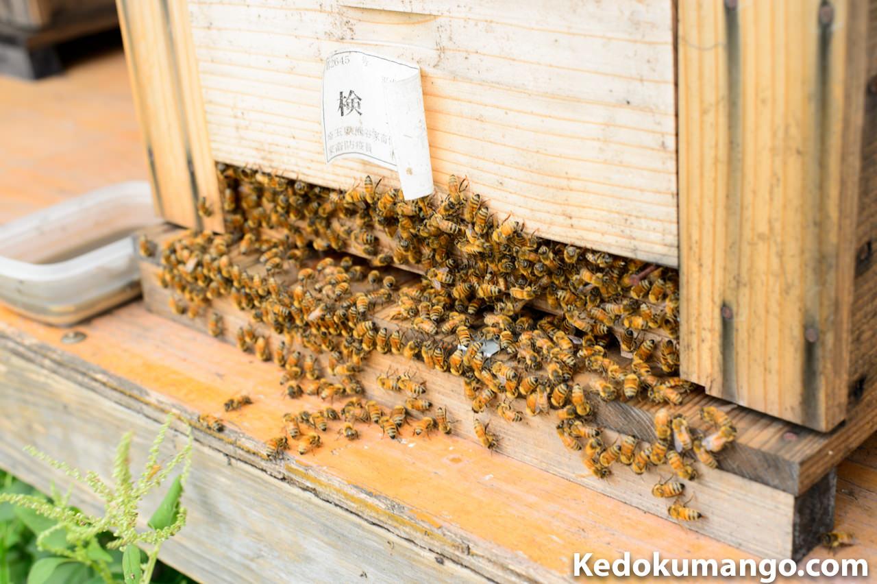 群生が良い状態のミツバチ