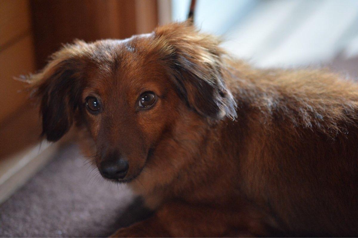 ネグリルの看板犬「ミルキー」