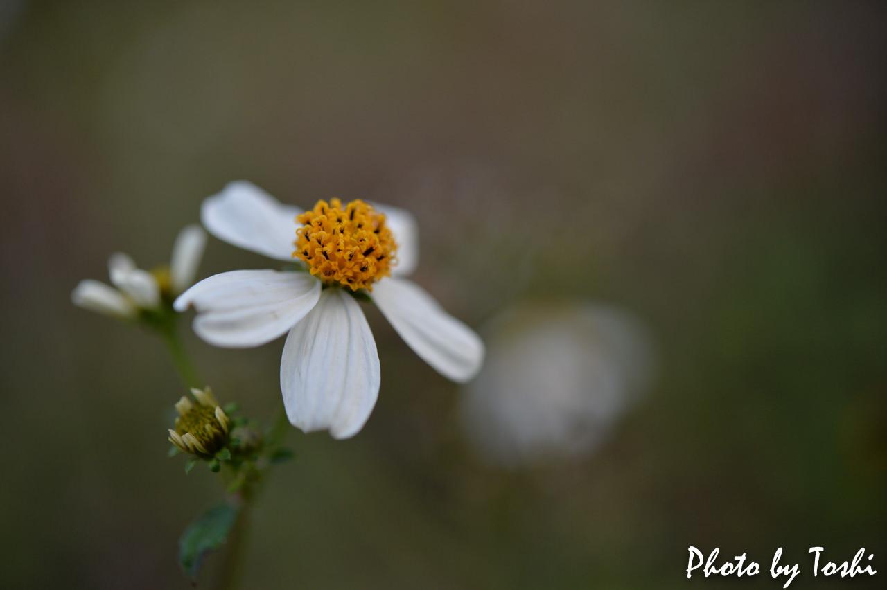 マクロレンズで撮影した草花-1