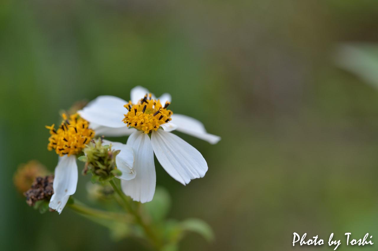マクロレンズで撮影した草花-2
