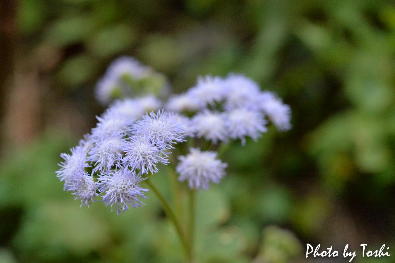 マクロレンズで撮影した草花