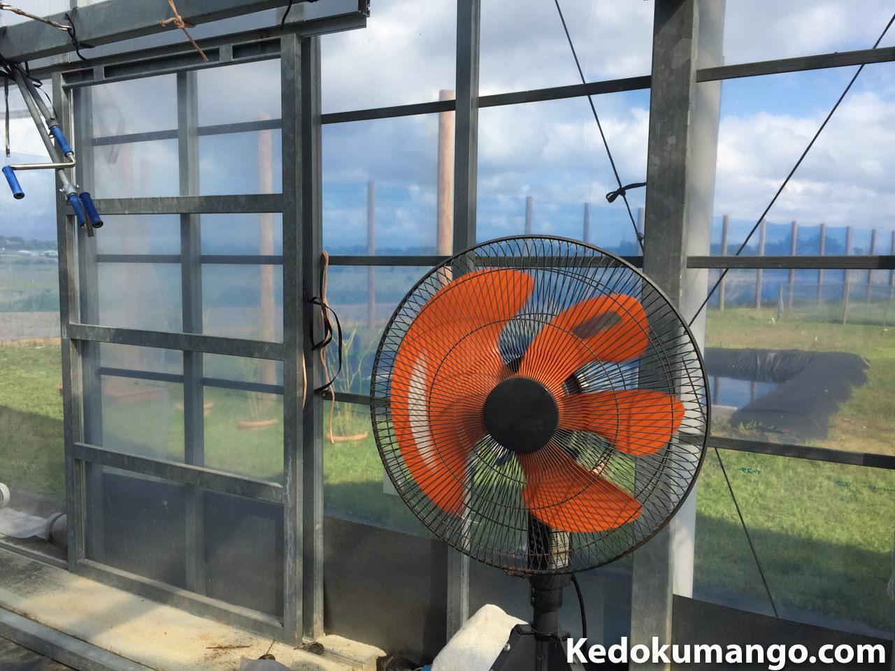 ビニールハウス内に扇風機