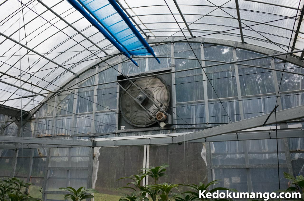 ビニールハウス内を冷やせ!! | 花徳マンゴー