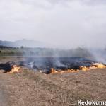 3月の徳之島では、サトウキビの春植えの準備が進められています!