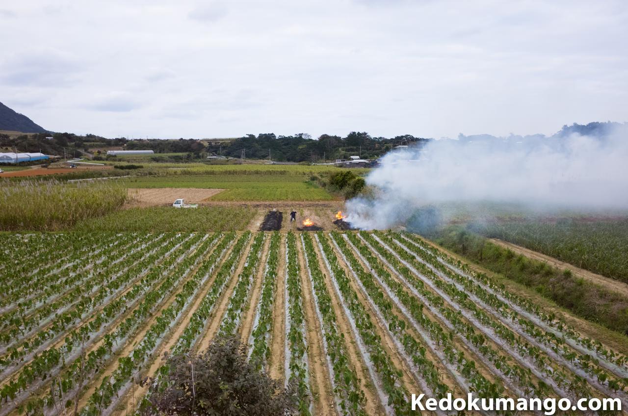 徳之島でのハーマ焼きの様子-3