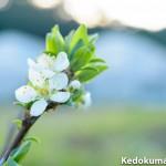 【徳之島】での3月上旬の「アボカド」「ブルーベリー」「すもも」の成長の様子