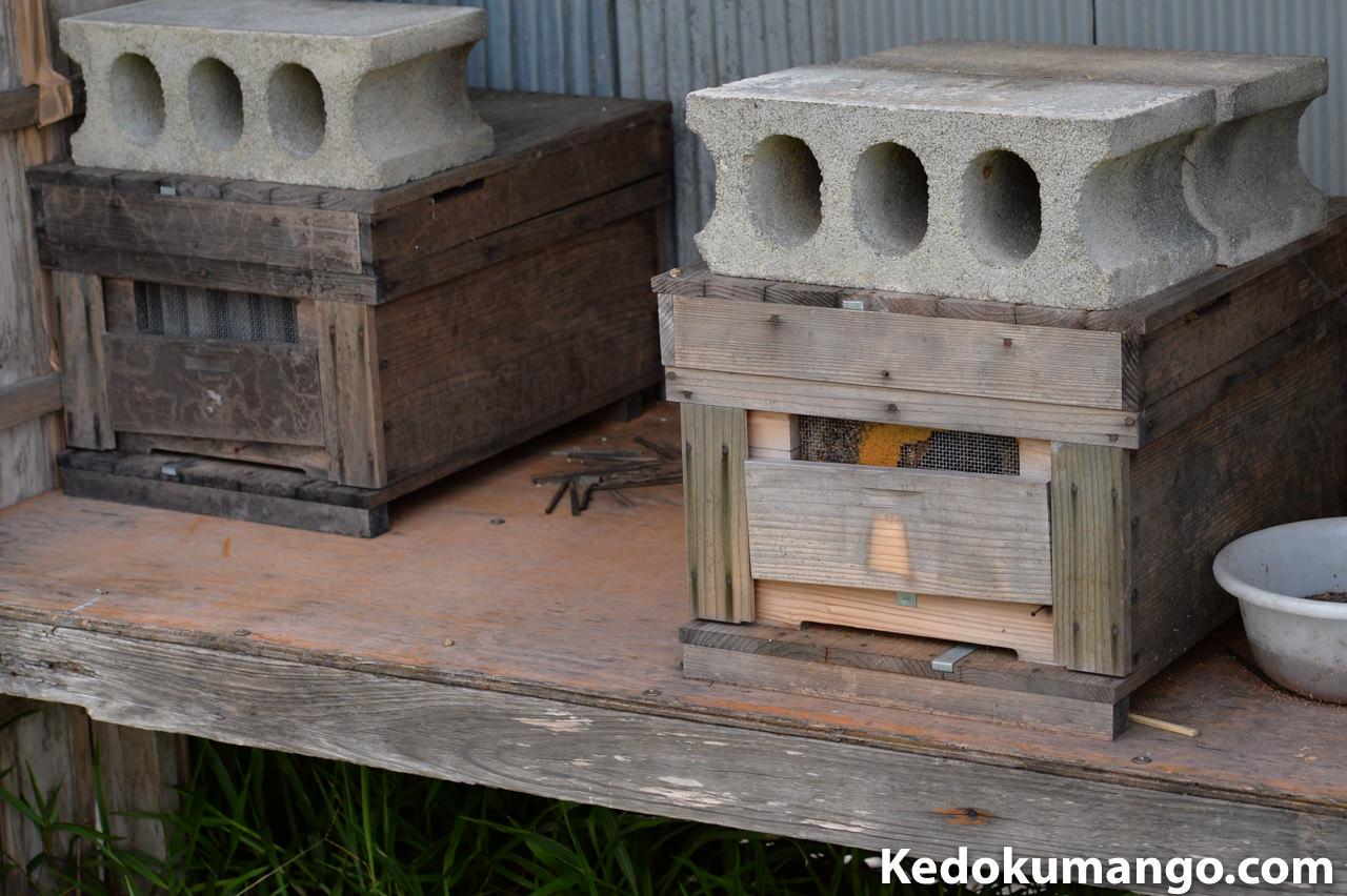 ミツバチの巣箱の近影