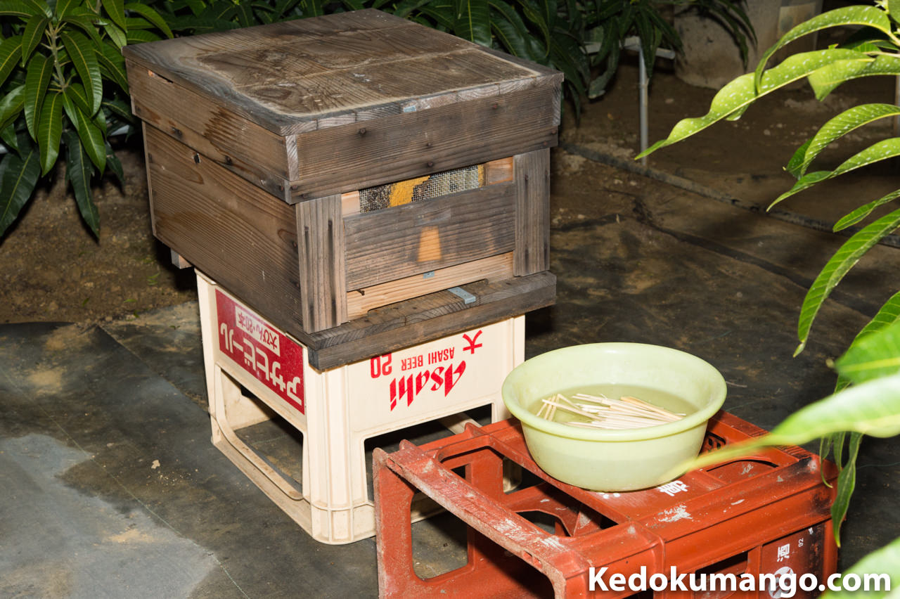 蜜蜂(みつばち)へ餌として砂糖水を与えたよ! | 花徳マンゴー