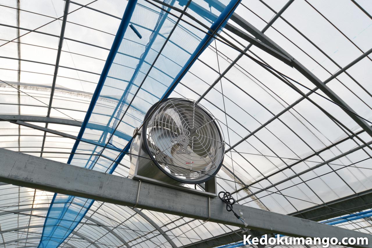 マンゴーハウスに設置した循環扇-1