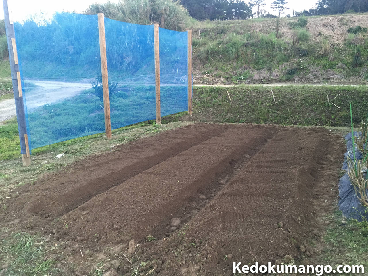 家庭菜園の耕運完了