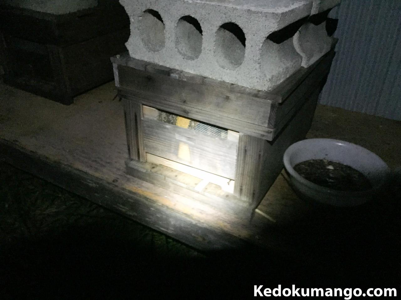 夜に見るミツバチの巣箱の様子