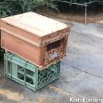 マンゴー栽培のビニールハウスへ第2陣の蜜蜂(みつばち)がやってきた!