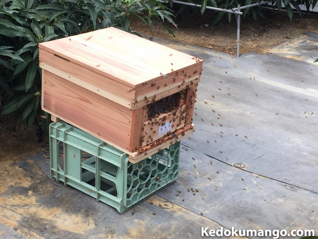 一斉に飛び出した蜜蜂(ミツバチ)の様子