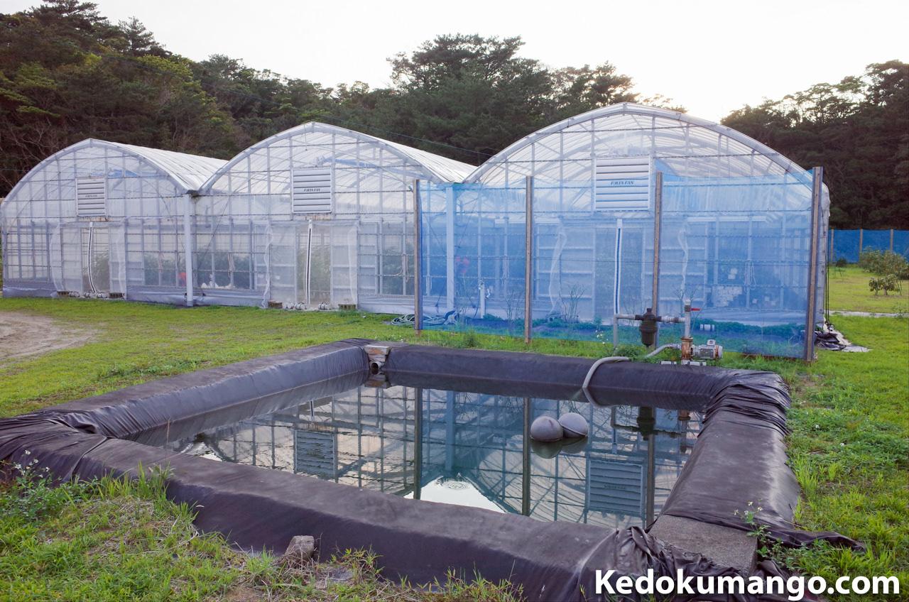 ビニールハウスの灌水用の池