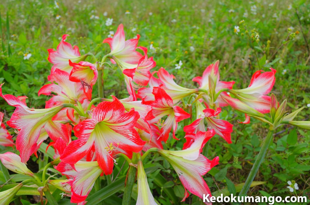 Ricoh GR2の雅で撮影した花_1