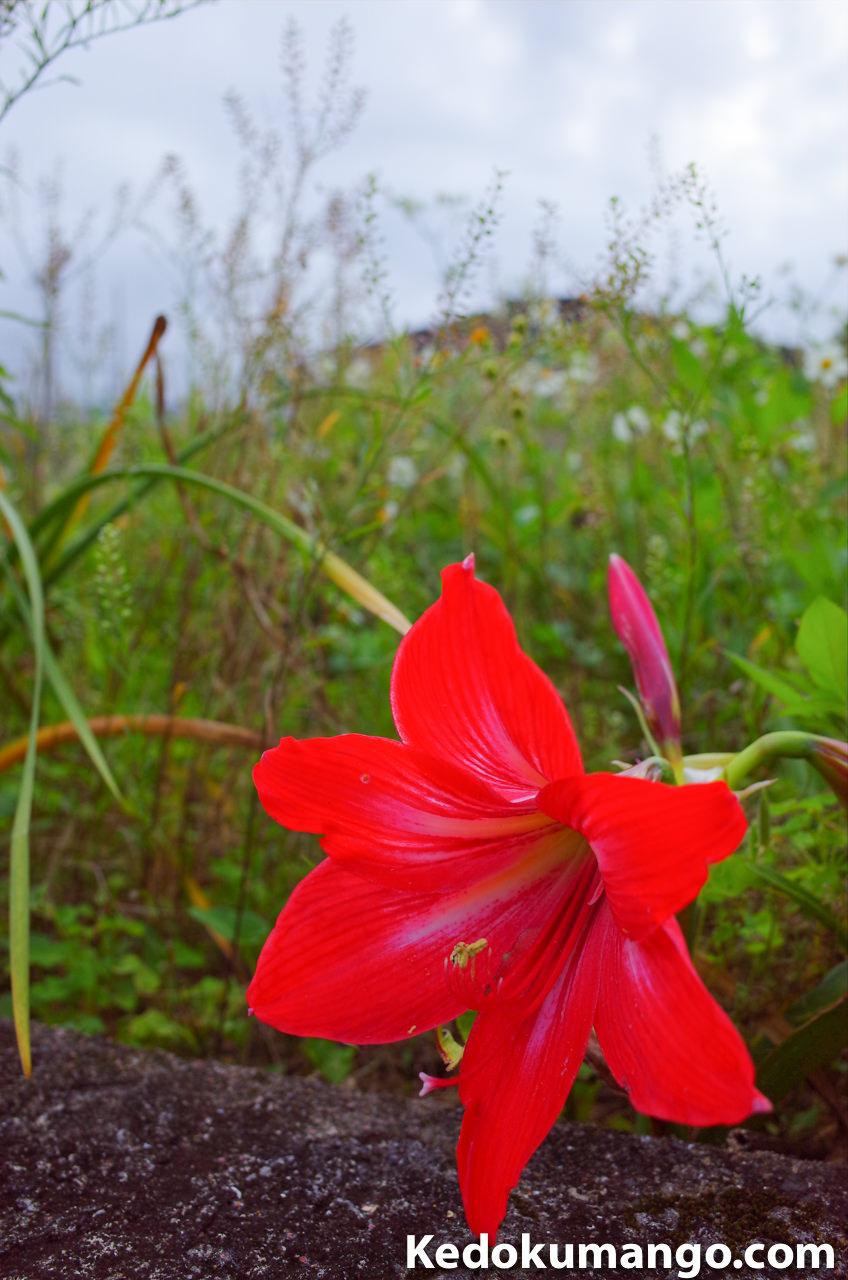 Ricoh GR2の雅で撮影した花_2