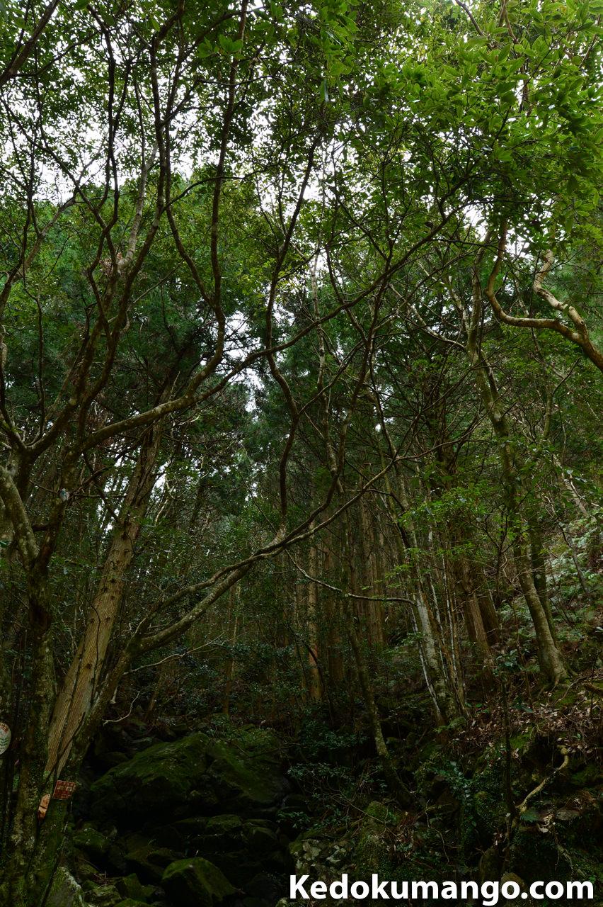 薬師谷渓谷での森林-1