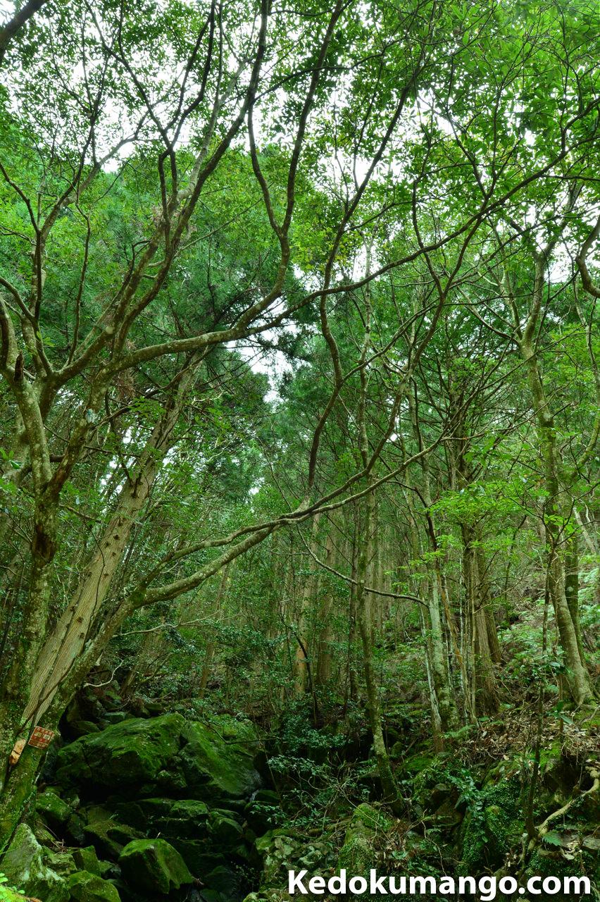 薬師谷渓谷での森林-2