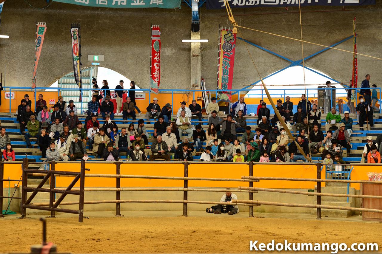 宇和島闘牛場の雰囲気