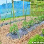 家庭菜園の「きゅうり」や「トマト」の為に生育棚を設けたよ!