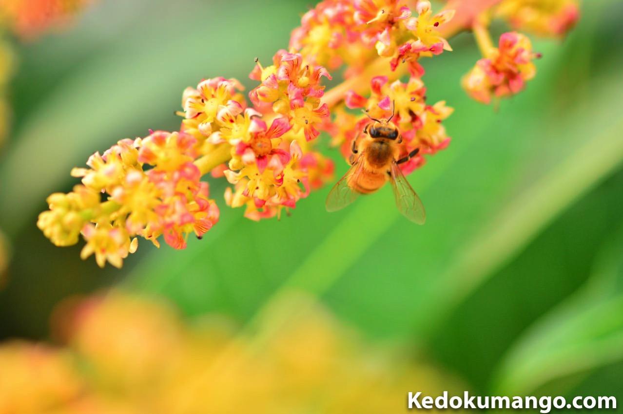 前ボケを取り入れたミツバチの受粉作業の様子-1