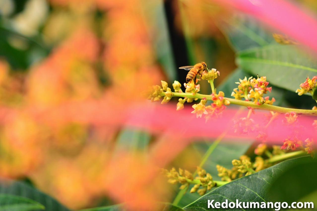 前ボケを取り入れたミツバチの受粉作業の様子-3