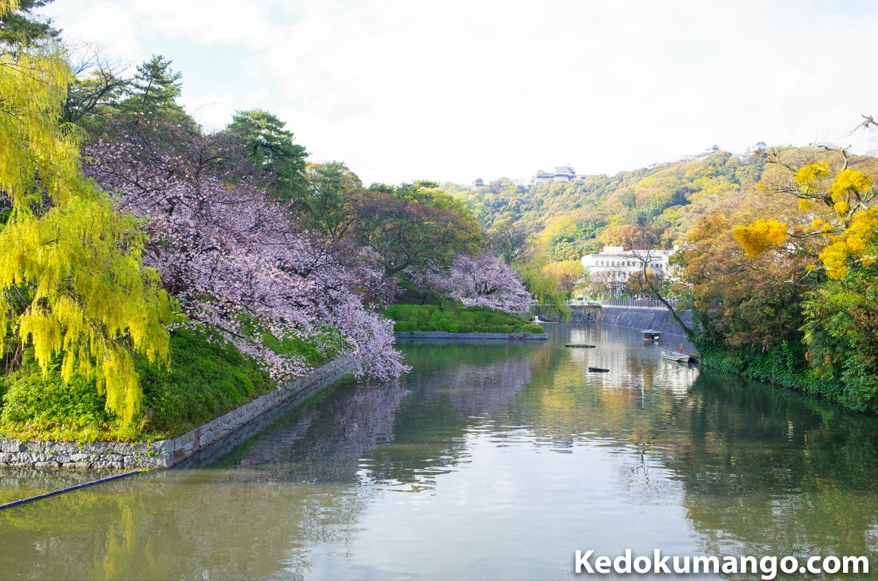 城山公園での堀にある桜