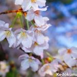 ニコンのフォトツアーへ参加する為に、徳之島から愛媛県松山市へ前入りしたぞ!