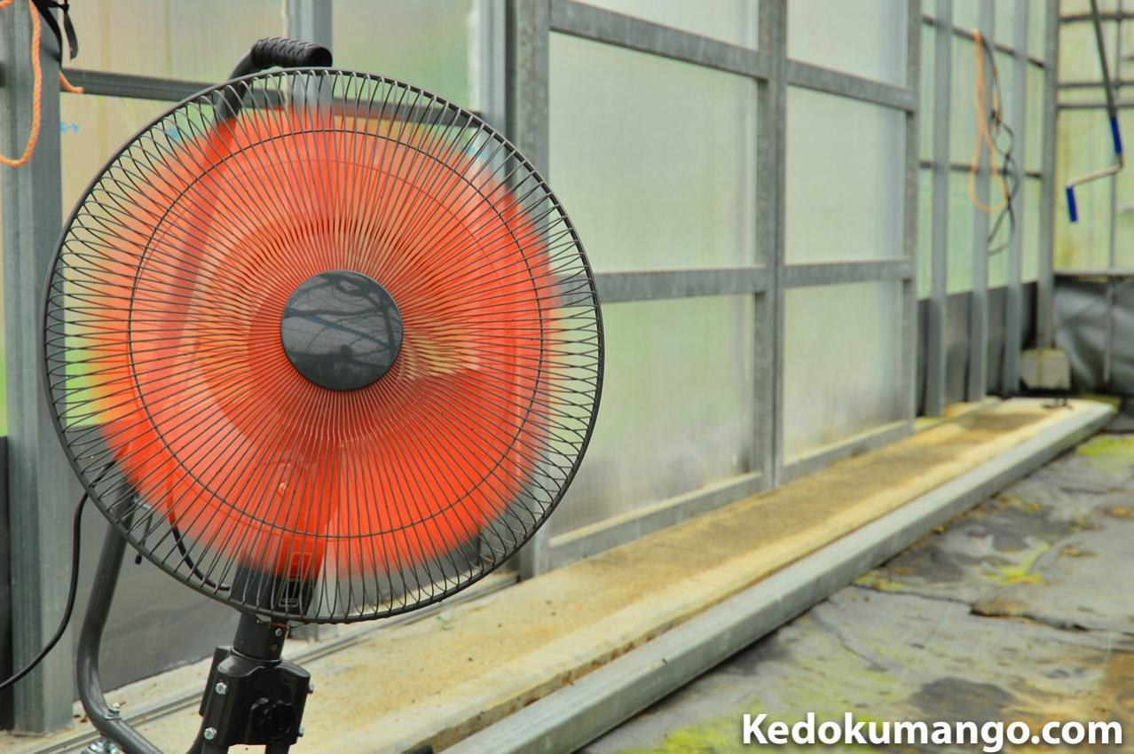 ビニールハウス内の業務用扇風機の様子-2
