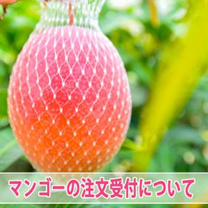 [徳之島]で育てたとっても美味しい【花徳マンゴー】の通信販売について | 花徳マンゴー